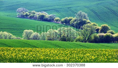 Rural landscape with agricultural fields and trees on spring hills. South Moravia region, Czech Republic