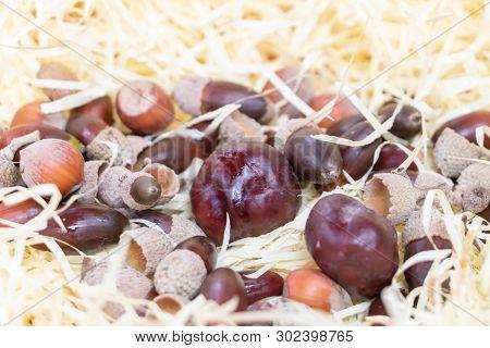 Harvest In Autumn, Nuts, Brown, Hazelnut, Acorn And Chestnut
