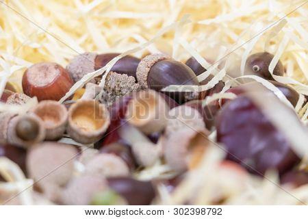 Harvest In Autumn, Nuts, Chestnut, Brown, Hazelnut And Acorn