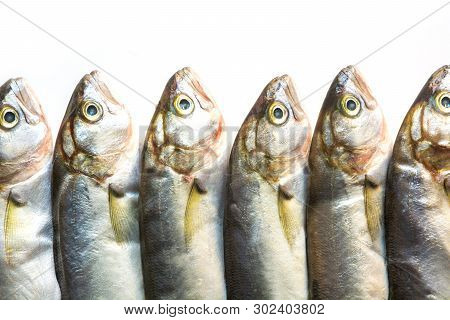 Black Sea Bluefish On White. Fish Pattern With Space For Text. View From Above.