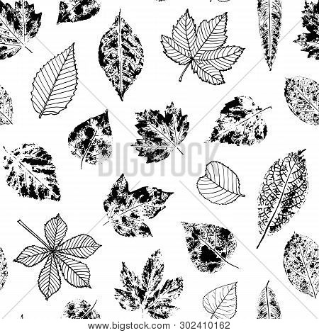 Seamless Pattern Of Black Stamp And Outline Leaves On White Background. Endless Texture With Maple,