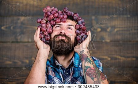 Winery Concept. Man With Beard Hold Bunch Of Grapes On Head Wooden Background. Vintner Proud Of Grap