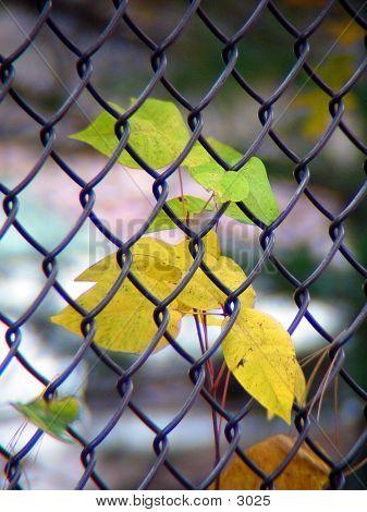 Leaf Through The Fence
