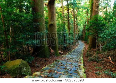 Famous Daimonzaka trail inside giant cypress forest, leading to Nachi falls, Japan