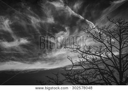 Silhouette Leafless Tree. Silhouette Dead Tree On Dark Dramatic Sky And Clouds Background For Scary