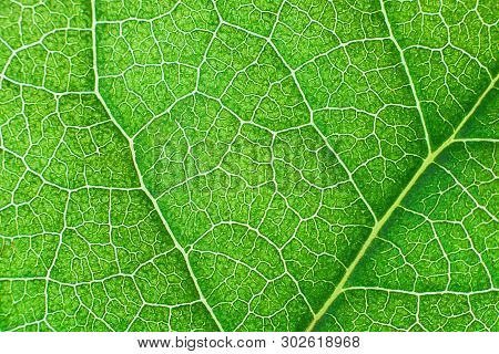 Green Nerved Leaf With Abstract Pattern. Abstract Background For Botany, Biology And Ecology. Horizo