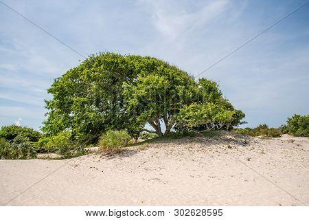 Sand Dunes At Cumberland Island National Seashore.