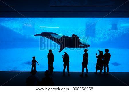 Nagoya, Japan - May 12, 2019: The Silhouette Of Tourists Watching An Orca Or Killer Whale Whale At T