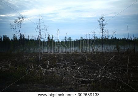 Evening Shot Of Cleared Forest With Leftover Wood.
