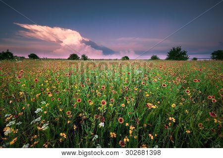 Texas Wildflower Field Under A Gorgeus Sky At Sunset