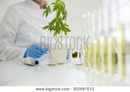 Watering Cannabis Plants In The Laboratory With Precise Dropper