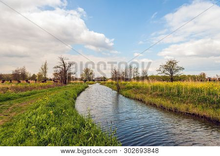 Natural Stream In A Rural Dutch Landscape. The Blue Sky Is Reflected In The Rippling Water Surface.