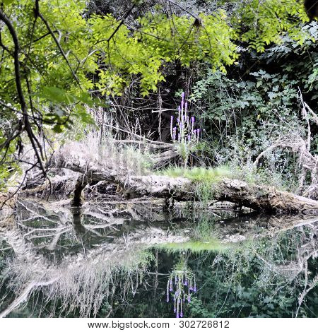 River In Impassable Thickets With Reflection In The Water.