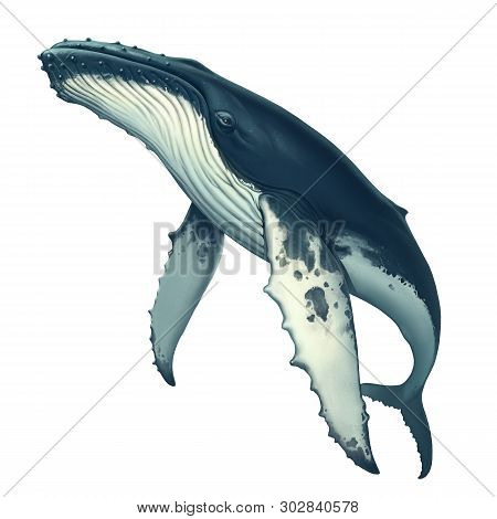 Humpback Whale Realistic Illustration Isolated. Big Gray Whale On A White Background. Blue Whale In