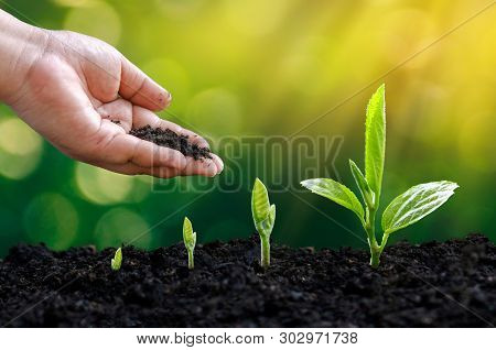 Tree Sapling Hand Planting Sprout In Soil With Sunset Close Up Male Hand Planting Young Tree Over Gr