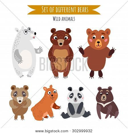 Vector Set Of Different Bears Isolated On White
