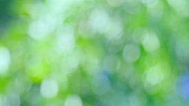 Natural Green Blurred Background. Abstract Background With Bokeh Defocused Lights. Royalty High-qual