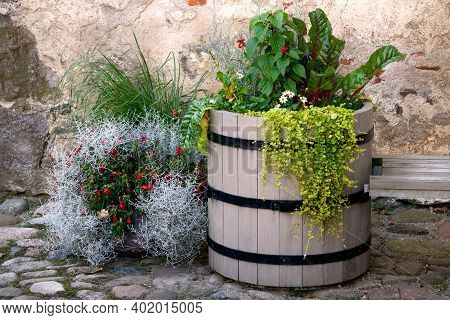 A Beautifully Decorated Flower Bed From A Barrel And From Improvised Means.