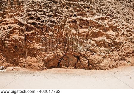 Sandy Soil Erosion View. Tree Roots On The Surface.