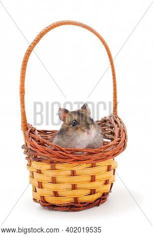 Dwarf Gray Hamster In Basket Isolated On White Background.