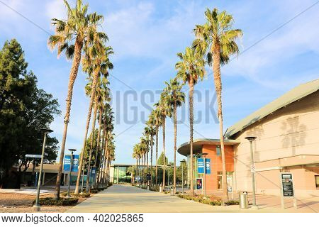 January 4, 2021 In Fullerton, Ca:  Modern Buildings Besides A Walkway Surrounded By Palm Trees Taken