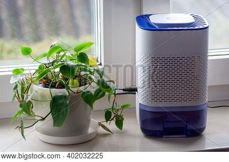 Dehumidifier On The Windowsill In The House By The Window. Next To A Green Flower. The Concept Of Mo