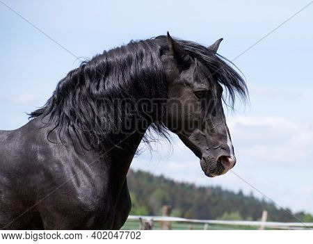 Portrait Of The Head Of A Noble And Wild Black Horse