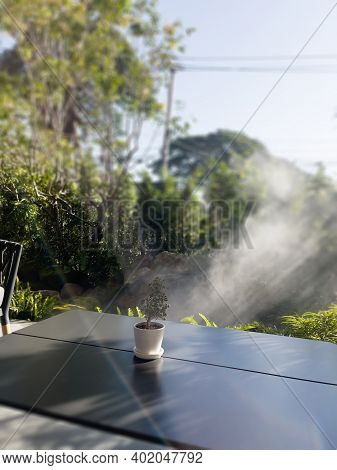 Table Of Free Space With Green Plant, Stock Photo