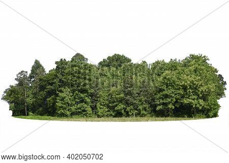 Tree Line Isolated On A White Background, Group Of Tree Isolated On White.