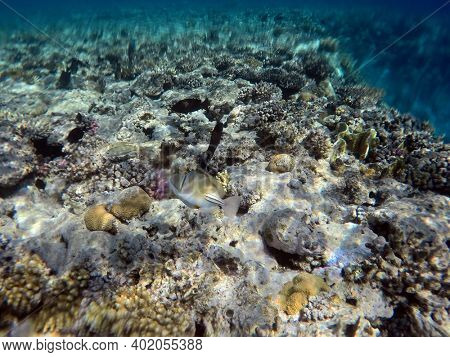 Tropical coral reef. Ecosystem and environment. Egypt. Near Sharm El Sheikh