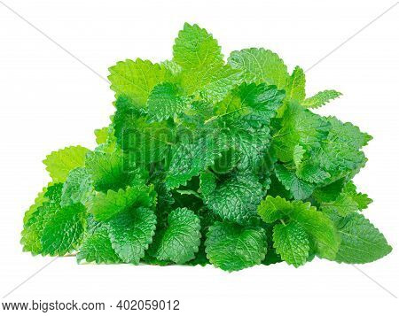 Fresh Spearmint Leaves Isolated On The White Background. Bushy  Mint, Peppermint Closeup