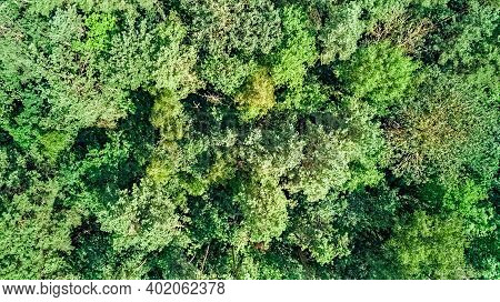 Birds Eye Aerial Top View On Wild Forest Area, Green Trees From Above, Pine Forest Background