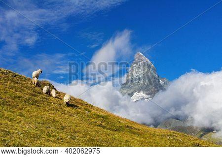 Beautiful Idyllic Alpine Landscape With Sheep And Matterhorn Mountain, Alps Mountains  And Countrysi