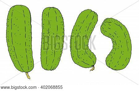 Pickled Green Cucumber Vegetable Vector Illustration, Set Of Green Cucumber With Vegetable Vector Il