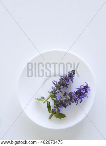 Spring Flowers, Ajuga Reptans, Bugle On A White Plate. Ajuga Reptans Is A Sprawling Perennial Plant