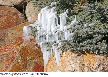 Icicles On A Fir Tree By A Waterfall	 In Utah