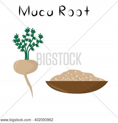 Maca Root. Healthy Detox Natural Product. Organik Dietary Supplement Vegetable. Superfood, Root For