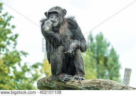 One Monkey In Zoological Garden Sitting On A Rock