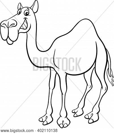 Black And White Cartoon Illustration Of Dromedary Camel Comic Animal Character Coloring Book Page