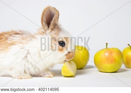 Little Funny Domestic Rabbit Play And Eat Apple On A White Background. Food For The Rabbit, Bunny Vi