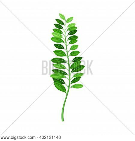 Fern Or Frond With Leaves And Erect Stem Vector Illustration