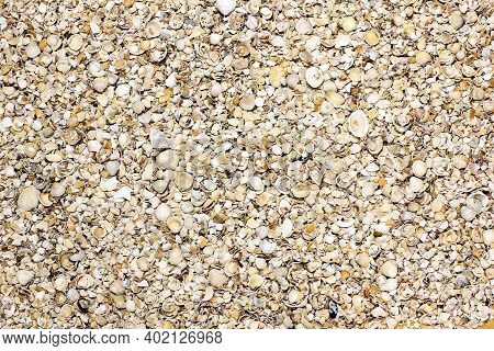 Background From Small Seashells. Summer. Relax On The Beach. Summer Background