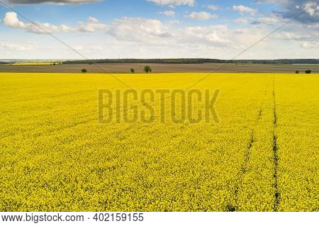 Agricultural Landscape Of A Rapeseed Field With Line And Blue Sky. Biofuel Production Concept. Postc