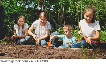 Children Helping Mother Working In Garden And Planting Vegetables On Garden Bed At Backyard. Concept