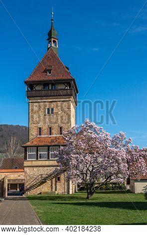 Siebeldingen, Germany - March 27, 2019. Magnolia Tree Blossom, Geilweilerhof, Institute For Grape Br