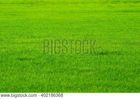 Football Field Nature Green Grass In Background