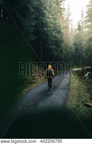 A Young Guy Wandering Into The Woods. Young Roamer. Lifestyle Photography In The Deep Green Forest W