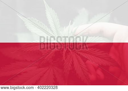 Medical Cannabis In The Poland. Leaf Of Cannabis Marijuana On The Flag Of Poland. Weed Decriminaliza