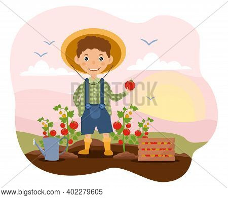 Horticulture Concept With Young Boy Tending To Tomatoes In The Garden In His Straw Sunhat, Colored C
