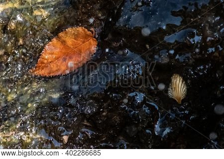 Nature Abstract; Fallen Autumn Debris Captured In The Pool Of Water